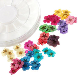 Wholesale Dry Flower Nail Decoration - 12 Colors Dried Dry 3D Flower Tips Nail Art Decoration Design Manicure DIY
