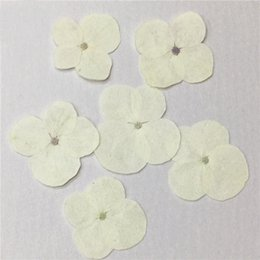 Wholesale Kids Party Wholesale Suppliers - Wholesale White Hydrangea Dried Pressed Flower Necklace DIY Kids True Plants Specimens For Festive And Party Suppliers Free Shipment 120 Pcs