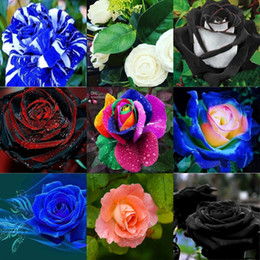 Wholesale wedding flower paper - Wholesale Beautiful Colors Rose Purple Rose Flower Seed 10 colors 100 seeds per package flower seeds home