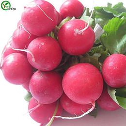 Giardinaggio del ravanello online-Cherry Radish Seeds giardino vegetale organico semi facile da coltivare 50pcs K017