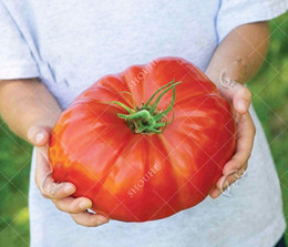 Pomodori biologici online-Gigante mostro semi di pomodoro bonsai semi biologici 10 pz / borsa pianta in vaso per casa giardino forniture spedizione gratuita