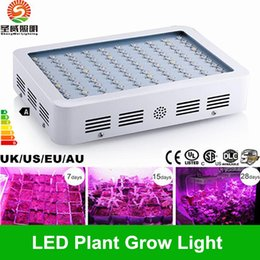 Wholesale 600W W W Hot Sale Double Chips LED Grow Light Full Spectrum For Veg Bloom Hydroponic Planting EU AU US UK Plug
