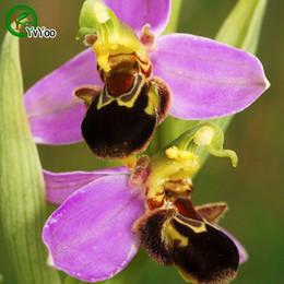 2019 i semi di orchidee sono rari Semi di orchidea Rare Bonsai Balcone Fiore Semi in vaso Giardino domestico fai da te 30 Particelle / lotto E012 i semi di orchidee sono rari economici