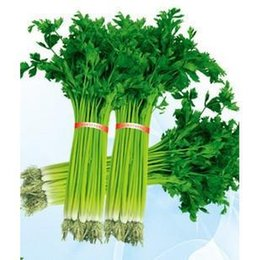 Wholesale Celery Seeds - Garden Plant 500 Particle   Bag Celery Seeds Vegetables Seeds Grow Courtyard Spice Celery Seeds Bonsai Seed