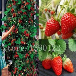 2019 sementes ornamentais de pimenta 300 pcs escalada morango sementes grandes morangos deliciosas frutas e vegetais sementes para casa jardim NO-GMO morango