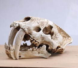 Realista sable diente gato tigre cráneo Sabertooth Smilodon Fatalis modelo blanco desde fabricantes