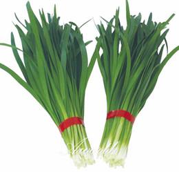 2019 semi di glicine Verdura cinese 500 semi di erba cipollina facile da coltivare giardino domestico di casa non-OGM alta tasso di germinazione alta resa