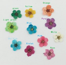 Wholesale Lights For Jewelry Display - 100pcs Pressed Dried Plum Blossom Flower Plant Herbarium For Times Gems Jewelry Pendant Rings Earrings Flower Making Accessories