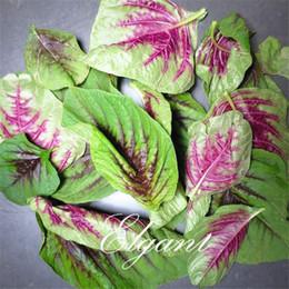 Wholesale Vegetable Fast - Red Leaf Amaranth Vegetable 1000 Seeds Fast-growing Easy to Germinate