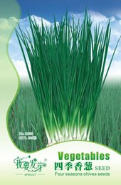 Wholesale Onions Seeds - Vegetable Seeds Four Seasons Chive Onion Terrace Potted Four Seasons Can Play 120 Capsules   Bag 3bags per lot
