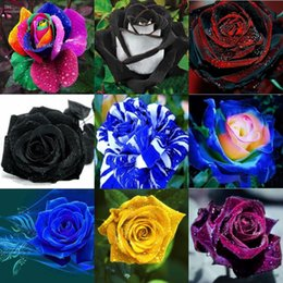 Wholesale Romantic New Year - Free Shipping Rose Seeds Attract 10 Colors Romantic Red 100 Piece Seeds Per Package Home Garden Seeds