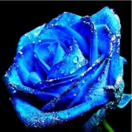 Wholesale garden dragons - Flower Bonsai seeds 100 pcs Blue Dragon Rose Seeds Rare Color DIY Yard or Potted flower Home Garden! Free Shipping!