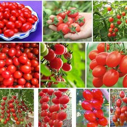 Wholesale Tomato Seed Wholesaler - Cherry tomato seeds,red tomato cherry tomatoes,vegetables fruit seed about 50 particles