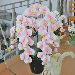 Wholesale Orchid Sales - Hot Sale 100 Pcs pack Unique Butterfly Orchid Seed Garden Bonsai Flower Seeds OR09453