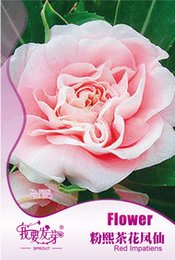 Wholesale impatiens flower - Camellia impatiens seed powder day, multicolor, potted flower seed 20 seed particles 3bags per lot