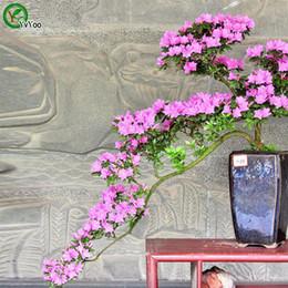 fiori azalea Sconti Azalea Flowers Seeds Bonsai Seeds Piante da giardino Semi di fiori Annual Herb 100 Particles / lot F024