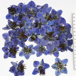 Wholesale Large Candles Wholesale - Large Blue Dried Pressed Flower Solenopsis Axillaris Flower Arrangements Specimens Raw Material For Candle Painting Photo Decoration 120 Pcs