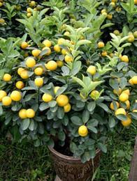 rari fiori esotici Sconti 50 pezzi / borsa semi di albero di limone alto tasso di sopravvivenza bonsai semi di frutta per la casa gatden bonsai semi di limone