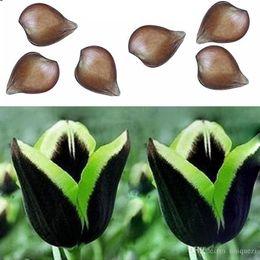 Wholesale Rare Beautiful Flowers - 2Pcs Rare Green Edge Black Dragon tulip bulb (Not Seed) Beautiful Home Decor New
