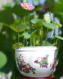 Wholesale Lotus Flower Bowl - 5 pcs bowl lotus flower plants lotus seed plant bonsai Lotus seeds teach you How to Plant home Garden Free Shipping