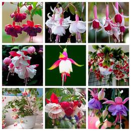 sementes de flores podem Desconto 9 tipos de sementes de flores perenes fúcsia pode ser escolher vasos de flores diy plantio de flores sementes de flores de sino - 100 PCS