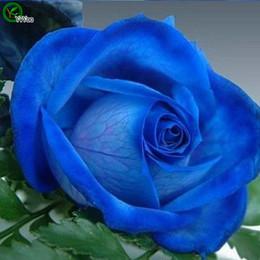 Distribuidores De Descuento Hermosas Flores Rosa Azul Hermosas