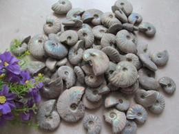 Wholesale Crystal Mineral Wholesalers - top ! natura AMMONITE AMMOLITE SHELL ore energy chakra stone wholesale Raw Mineral Specimens Ore