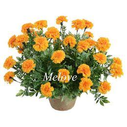 Wholesale French Marigold Flower - Tagetes Patula 100 Pcs Flower Seeds French Marigold landscape Flower