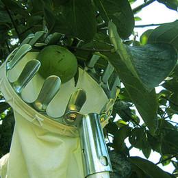 escolhendo uvas Desconto Escolhedor da Fruta do metal Conveniente Colheita de Frutas Hortícolas Ferramentas de Colheita de Pêssego Maçã # 5