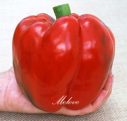 Semi di pepe rosso online-Red Bell Pepper Vegetable 20 Seeds Sweet Pepper Seeds Facile da coltivare 100% Real Very Tasty