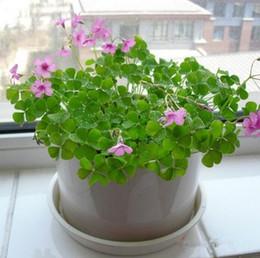 Semi coperti online-Semi a quattro foglie - Crescere la propria fortuna 4 foglie di trifoglio Estate coperta Piante in vaso Fiori Fiori estivi Tipi di seme di trifoglio HY1164