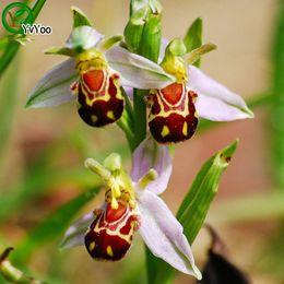 i semi di orchidee sono rari Sconti Semi di orchidea Semi di fiori rari rare Giardino domestico di DIY Facile da coltivare 30 Particelle / lotto E012
