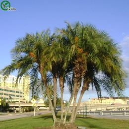 Semi di palma Semi di albero bonsai Molto bella Albero interno Giardino domestico Pianta 10 particelle / sacchetto N010 cheap indoor bonsai tree seeds da semi di bonsai alberi interni fornitori