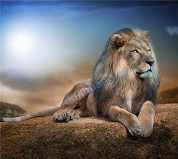 100% yuvarlak Tam Alan Vurgulayın Elmas İğne Diy Elmas Boyama Çapraz Dikiş Kiti Elmas Nakış hayvan aslan 077 ücretsiz kargo nereden kot eşarpları tedarikçiler