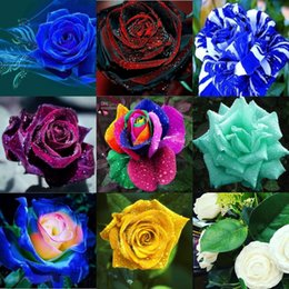 Wholesale Wedding Flowers Roses Blue - Charming Colors Rose Deep Blue Rose Seed 10 colors 100 seeds per package flower seeds home