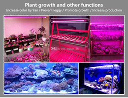 Wholesale Plug Grow Lights - 5pcs set Led Grow Light 85-265V EU US AU Plug 660nm ReLED Aquariumd 455nm Blue Led Plant Grow Lamp T5 LED Tube 11Red 4Blue for Indoor Plants