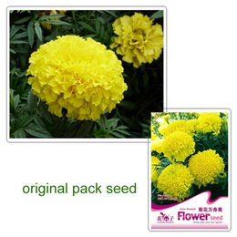 Wholesale Marigolds Flowers - 1 original pack 50 pcs African Aztec Marigold Flower seed for home &garden Free Shipping