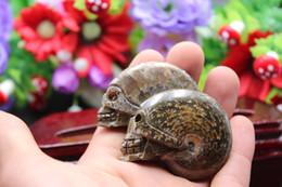 Wholesale Crystal Skull Carving - 2PCS natural quartz crystal snail fossil skull healing carving