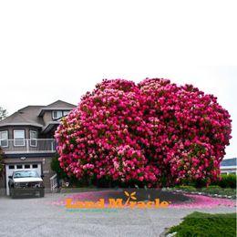 bonsai di acero rosso giapponese Sconti 10 semi / pack, incredibile rosa ciliegio, giapponese Sakura Cherry Blossom Tree Seeds per giardino di casa fai da te, albero di fiori di ciliegio legnoso
