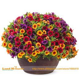 Semi di fiore di petunia online-100 Semi / pack, Mix Calibrachoa Giardino Petunia Shuttlecock Fiore Corno Bonsai Sementi di fiori Bonsai Semi per Giardino FAI DA TE Deco