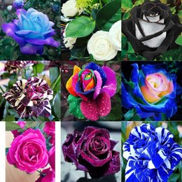 Wholesale Wholesale Package Supplies - Cheap New Varieties 10 Colors Rose Flower Seed Color 100 Seeds Per Package Garden Supplies Seeds
