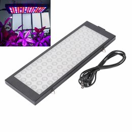Wholesale Plant Hydroponics - 15W LED Plant Grow Lights , LEDs Indoor Plants Growing Light Bulbs with Red Blue Spectrum Hydroponics Plant Hanging Kit fo