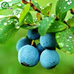 Богатое питание семена черники вкусные фрукты мини горшках семена фруктовых деревьев интересные бонсай растение 30 частиц / лот b005 от
