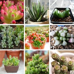 Wholesale Wholesale Succulent Plants - Mixed style mini succulent flower seeds green plants succulent for living room as home decoration 100pcs lot