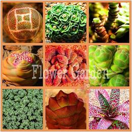 semi di pseudotruncatella Sconti 100 semi Lithops Pseudotruncatella Living Stone Rare Succulente Semi Giardino di Casa semi di Piante, # 1VQCIJ