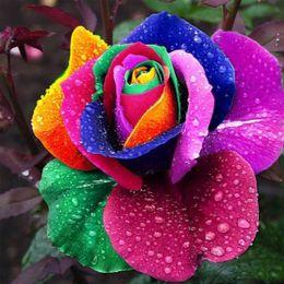 varietà di rosa rossa Sconti 100 semi Rare Holland Rainbow Rose semi di fiori Amante colorato Home Garden piante rare semi di fiori arcobaleno rosa