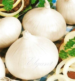 Wholesale Winter Seeds - White Onion Vegetable 100 Seeds Non-GMO Easy-growing Winter Hardy Home Garden Vegetable