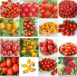 Wholesale Tomato Seeds Wholesale - 100pcs 24 KINDS Tomoto Seeds mixed packed Purple Black Red Yellow Green Cherry Peach Pear Tomato Seed Organic Food for Garden