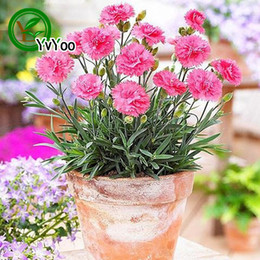 2019 piantando semi di garofano Mix Carnation Seeds Bonsai Flower Seeds Piante in vaso Fiori 50 Particles / Bag L074 piantando semi di garofano economici