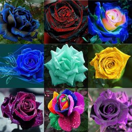 Wholesale Rainbow Garden - New Colourful Rainbow Rose Seeds 10 Colors 100 Pieces Per Package Free Shipping Rose Seeds Plant Garden Beautiful Flower Seeds